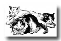 cat-clipart-6-tn